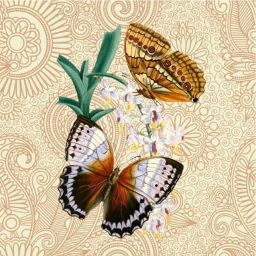 Boho Butterflies